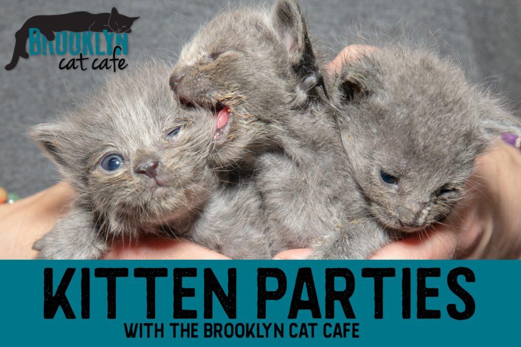 Brooklyn Cat Cafe // catcafebk